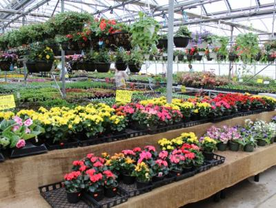 Annuals galore to choose from.