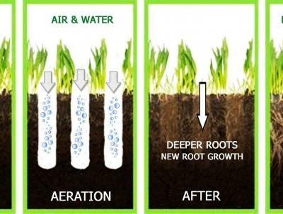 The benefits of Aeration and Overseeding