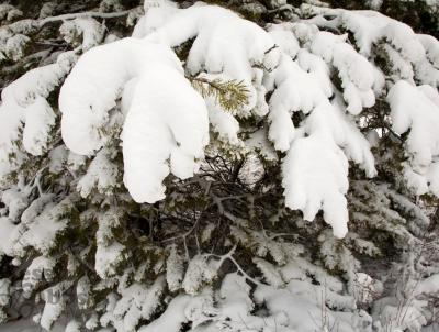 Use upward motion with broom to remove heavy, wet snow