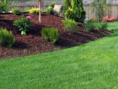 Thick, green, weed-free lawn