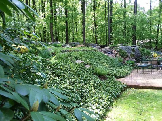 A planted slope with pachysandra.