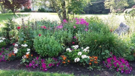 A beautiful island bed filled with summer flowers.