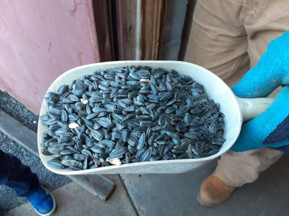 Black-Oil Sunflower Seeds