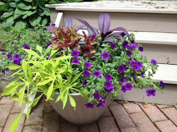 A pot of colorful annuals.