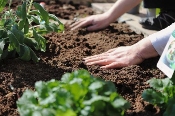 Work your soil and add a layer of compost/organic matter.