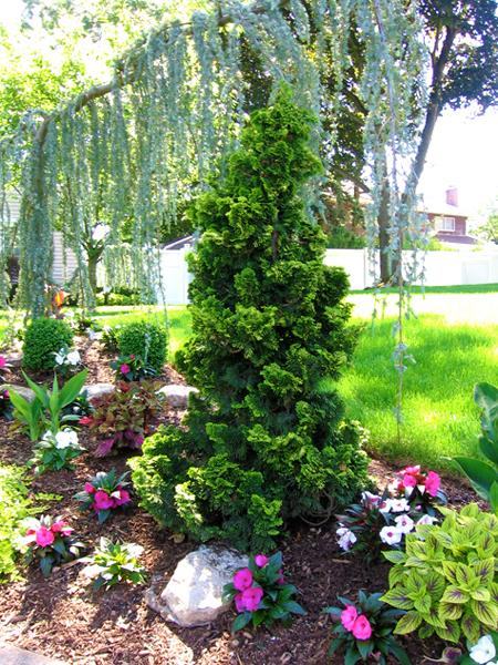Plant Evergreens For Winter Interest Whitehouse Landscaping