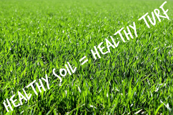 Healthy soil is resistant to insect and disease damage, requires less water and chokes out weeds.