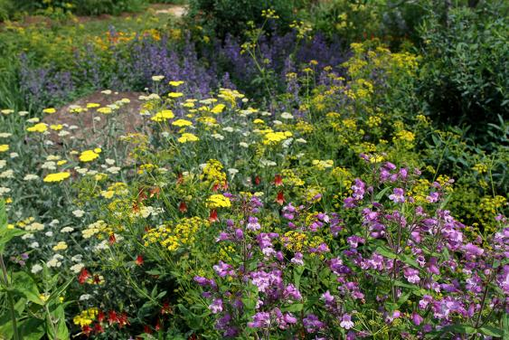 Plant a pollinator friendly garden.  Photo by Debbie Roos