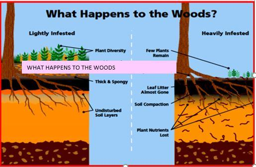 This is a chart courtesy of the Wisconsin Dept. of Natural Resources of the impact on forest soils and ecosystem.