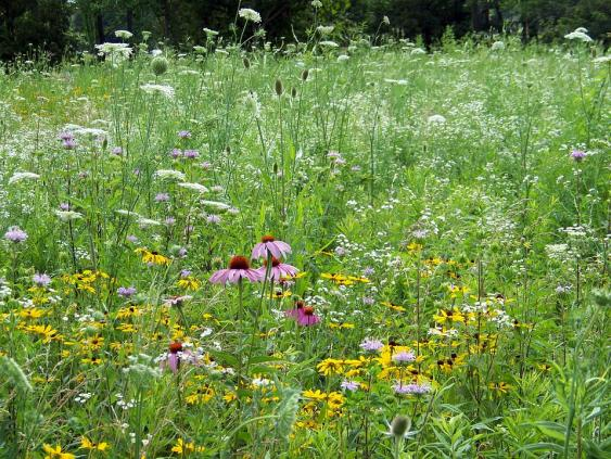 Some weeds can be attractive, and especially nice in a native environment.