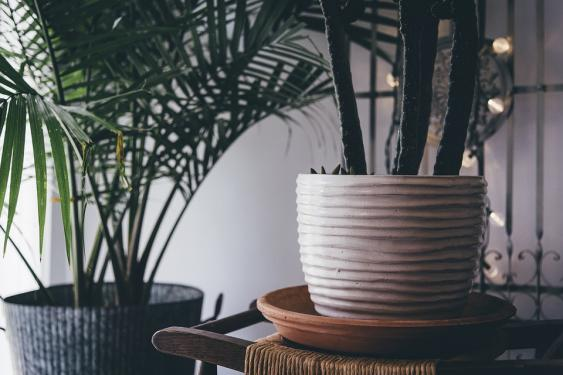 Indoor plants flourish with a little outside time in the summer.