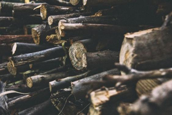 Wood piles attract wildlife that host and transport ticks.