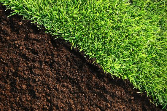 Healthy soil - thicker roots = beautiful, healthy green grass   = fewer weeds.
