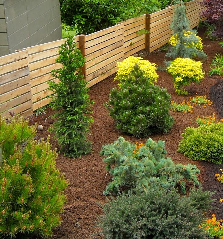 Dwarf Conifers for the Garden | Whitehouse Landscaping