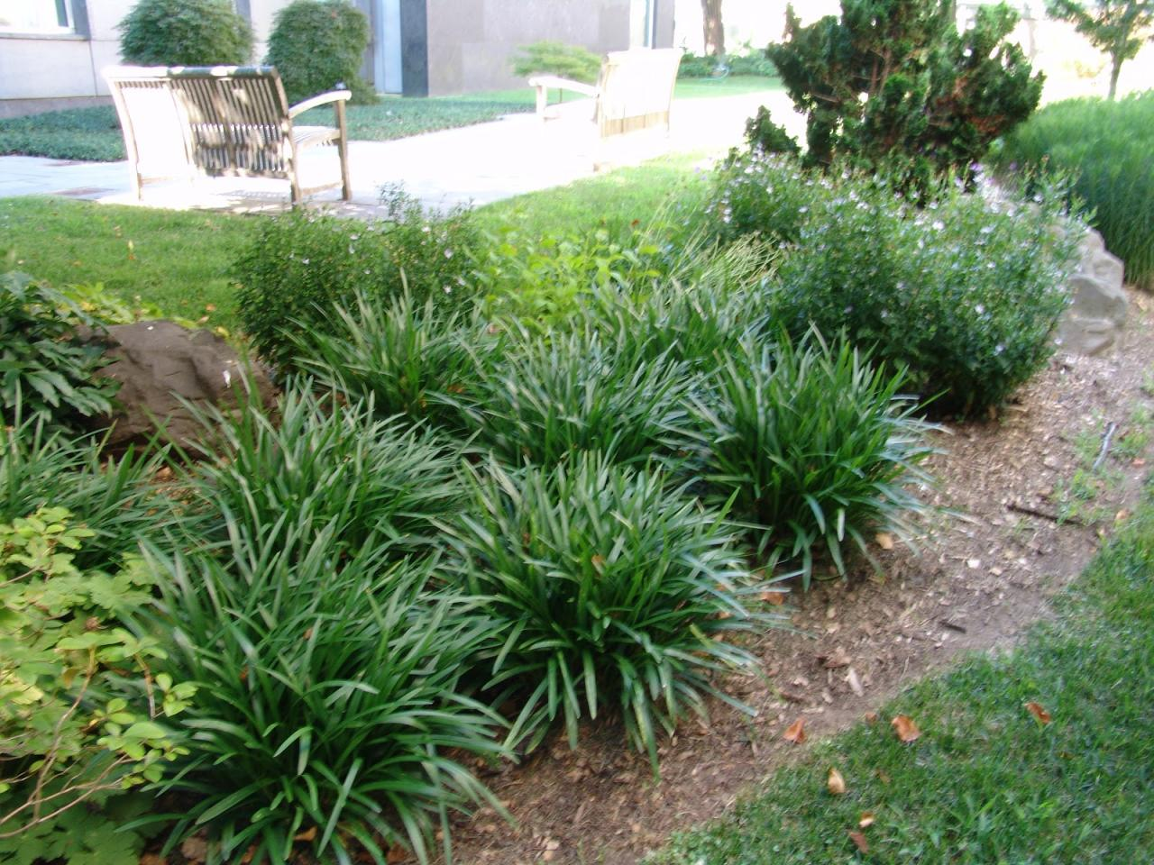Groundcovers Complement Any Landscape Whitehouse Landscaping