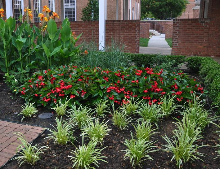 Looking for low maintenance try liriope whitehouse landscaping liriope muscari mightylinksfo