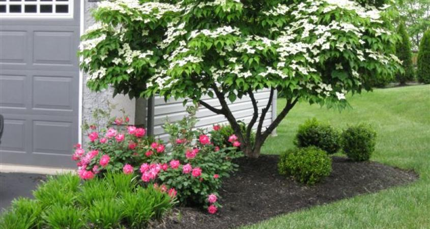 Landscaping, Royersford