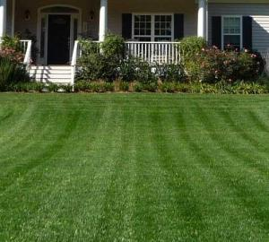 Aeration Lawn And Grass Overseeding Spring And Fall