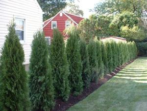 Yard Solutions in Collegeville, PA