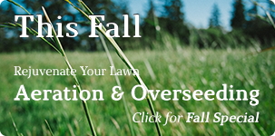 Fall Aeration and Overseeding Special